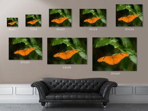 Butterfly | Macro Photography | Wall Art | Leaf | Nature | Calm | Green |  Lensbaby | Color Fine Art Photo | VSCO | Soft| Cool tones |Orange