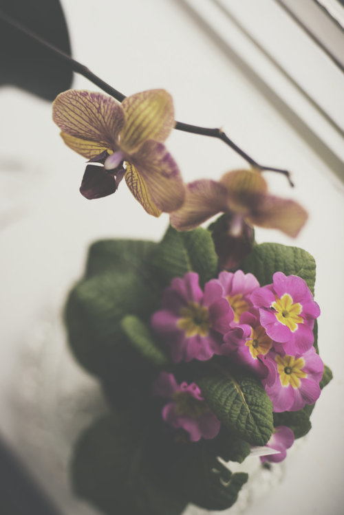 Lazy Days | Floral Photography | Wall Art | Flower | Nature | Calm | Orchid  Violet | Lensbaby | Color Fine Art Photo | Matte | VSCO |