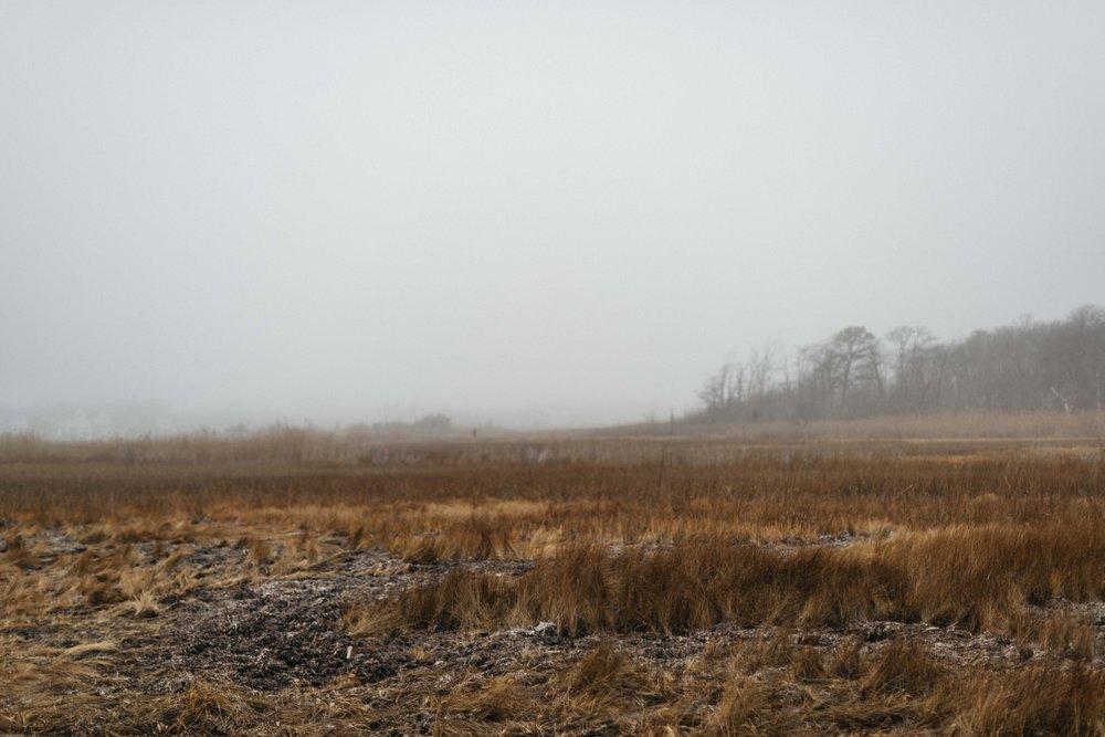 021_365-Bayshore_park_on_a_foggy_day-86.jpg