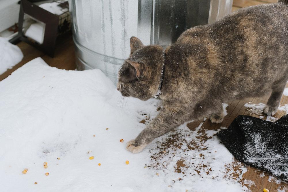 snowpocalypse-2015-cats-snow-long-island-photographer-0008.jpg