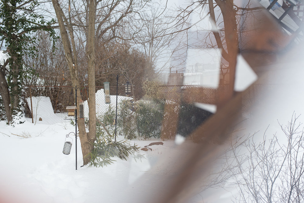 snowpocalypse-2015-cats-snow-long-island-photographer-0010.jpg