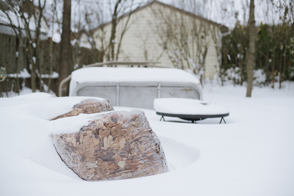 snowpocalypse-2015-cats-snow-long-island-photographer-0014.jpg