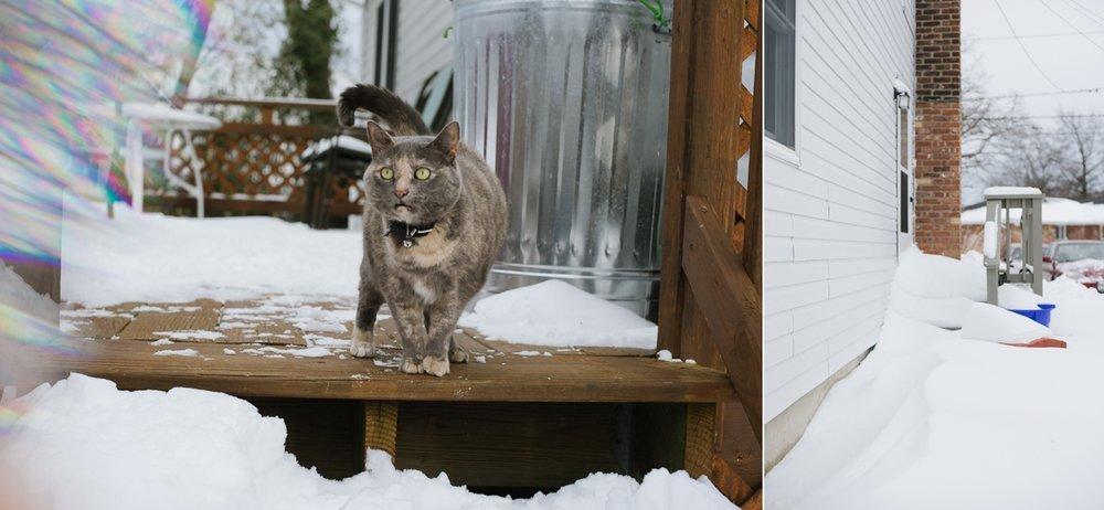 snowpocalypse-2015-cats-snow-long-island-photographer-collage-02.jpg