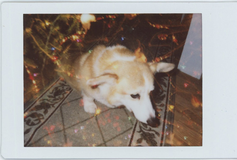 maine-hope-travel-photography-dog-instax-multiple-exposure-christmas-0001.jpg