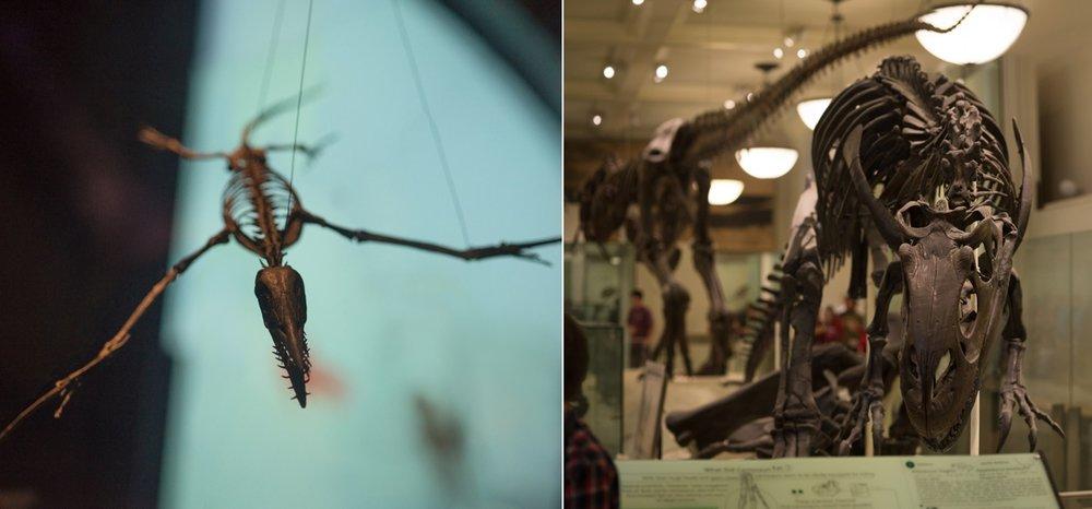 dinosaur-brenizer-bokeh-panorama-nyc-museum-of-natural-history.jpg