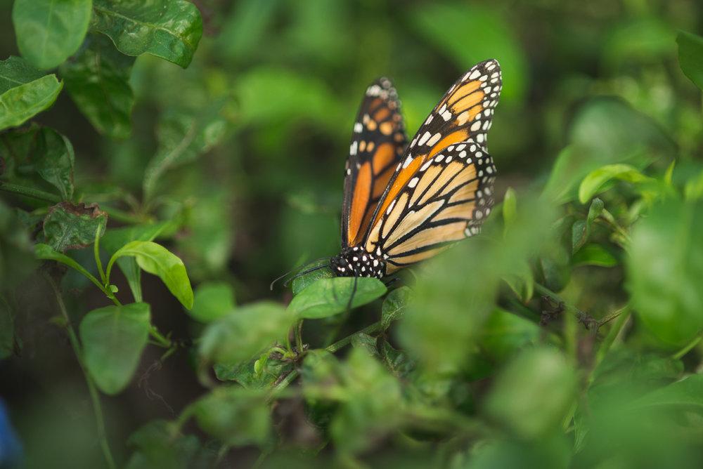 bronx-zoo-nyc-animal-travel-ny-wildlife-photography-butterfly-0023.jpg