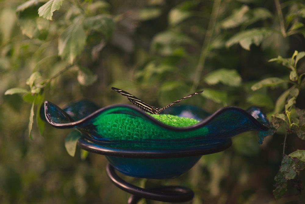 bronx-zoo-nyc-animal-travel-ny-wildlife-photography-butterfly-0024.jpg