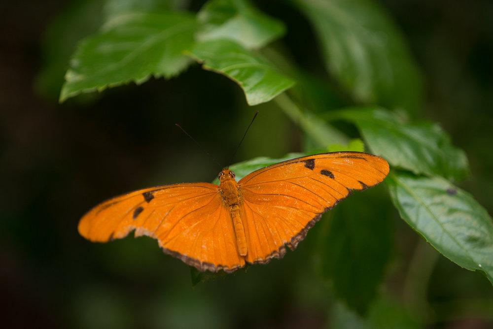 bronx-zoo-nyc-animal-travel-ny-wildlife-photography-butterfly-house0035.jpg