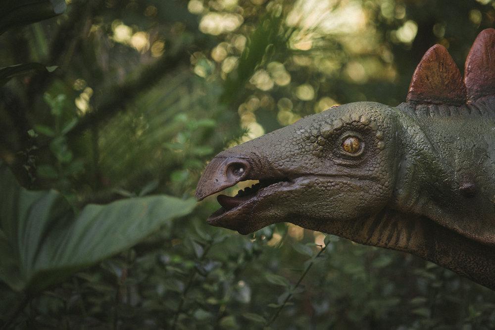 bronx-zoo-nyc-animal-travel-ny-wildlife-photography-dinosaur-0012.jpg