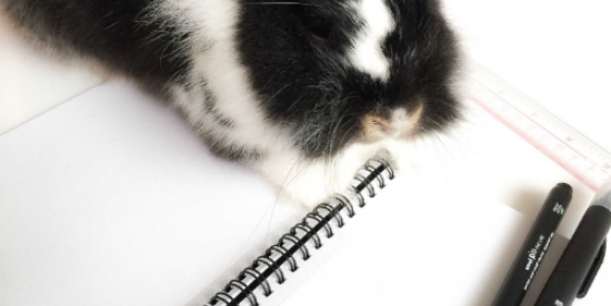The Instagram famous resident student bunny Sam.