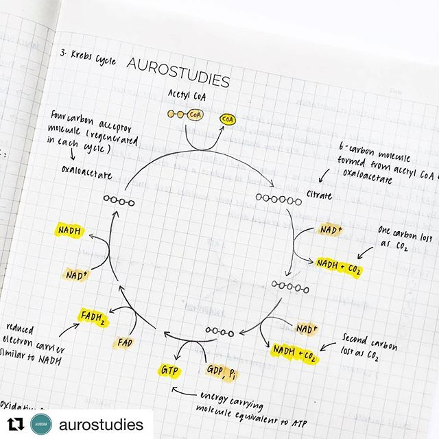 No mindfog with these notes. So clear to study from !! Thanks for sharing @aurostudies 😊