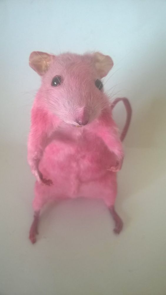 PINK SELF STANDING MOUSE