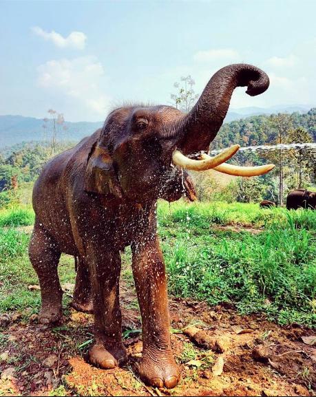 Prai the Elephant at Patara Elephant Farm in Chiang Mai, Thailand