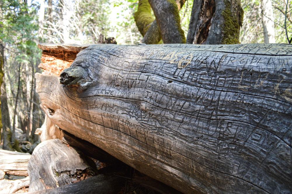 Yosemite, USA, 2015