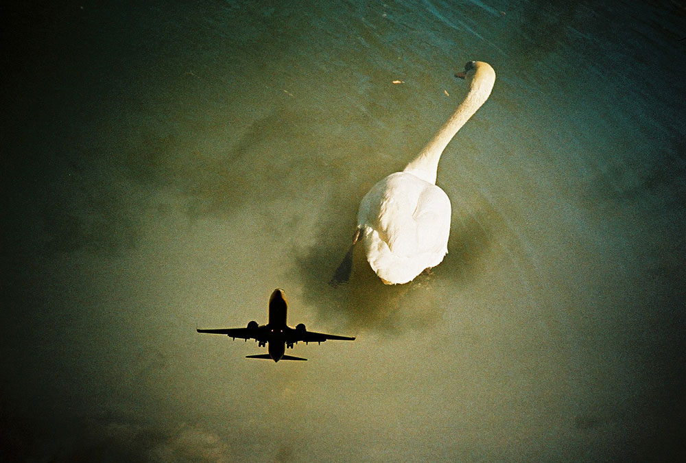 Lomography  Photo of the Day .
