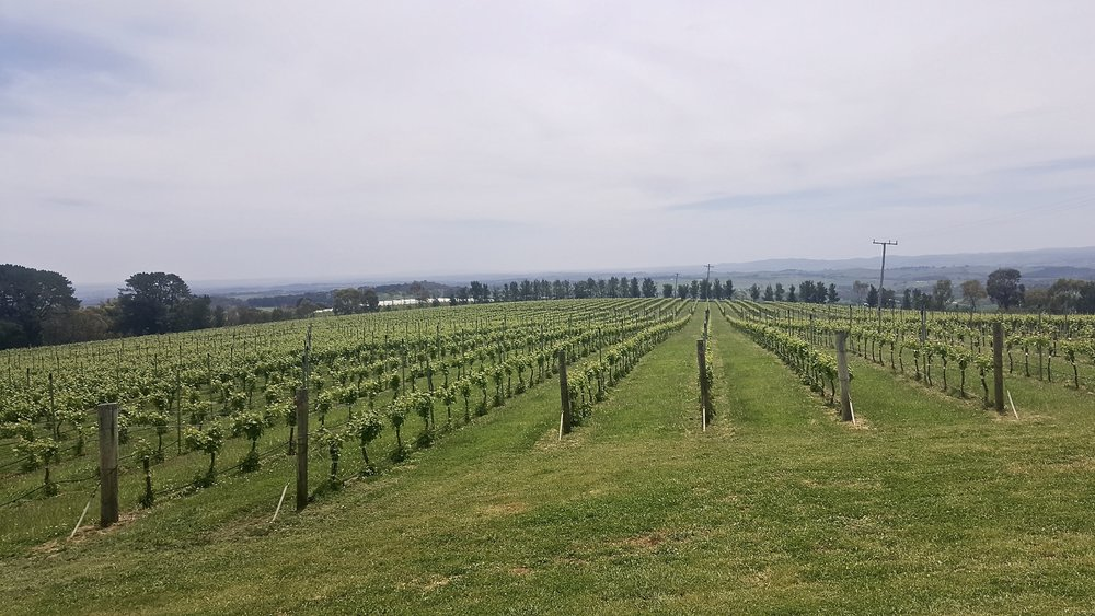 De Salis vineyard, Orange, Central New South Wales, Australia