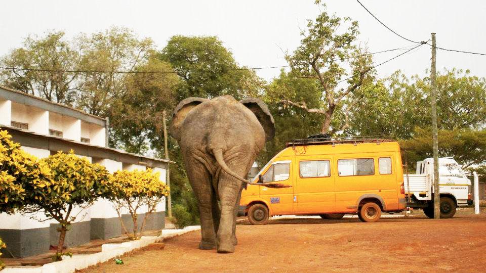 Elephant, Mole National Park, Ghana, Africa