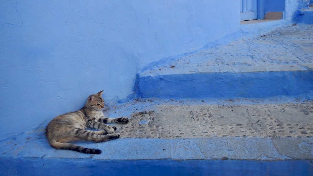 A cat relaxing in the cool of Chefchaouen's streets, Morocco