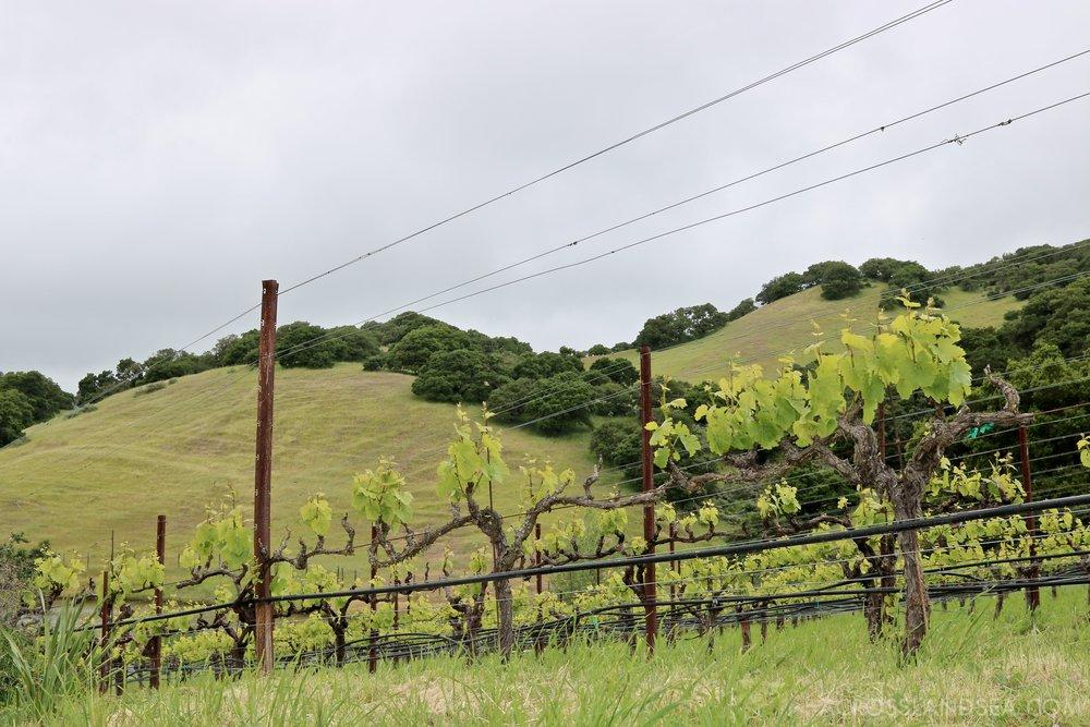 Nicholson Ranch vines