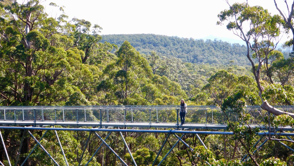 Valley of the Giants tree top walk, Western Australia @acrosslandsea