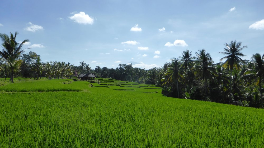 Rice terraces, Ubud, Bali, Indonesia @acrosslandsea