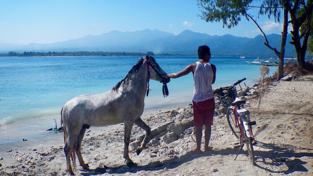 Horse on the beach, Gili Air, Lombok, Indonesia, @acrosslandsea