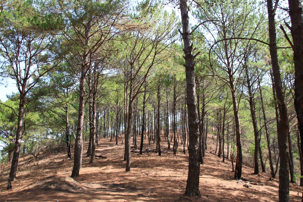 The ultimate guide to Kalaw, walk in the forests