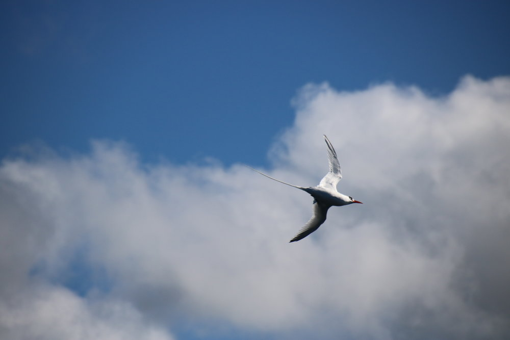 Bird flying. 15 things to know before travelling Galapagos