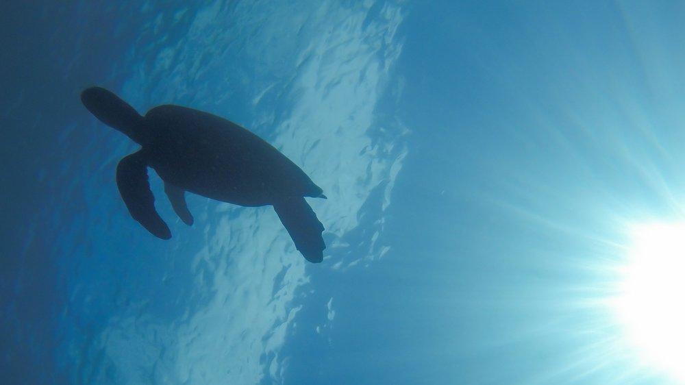 Turtle, under the sea. Galapagos Islands, Ecuador. Across Land & Sea