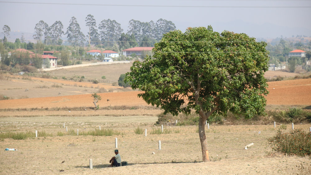 Man under tree, slow train from Kalaw to Inle, Myanmar