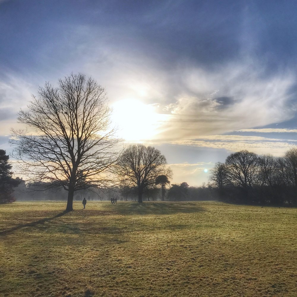 A highlight of staying at my parent's is walking at Nonsuch Park every morning. A beautiful 300 acres of parkland which was once the home of Henry VIII's Nonsuch Palace.