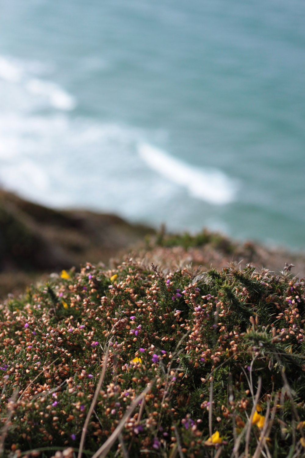 Heather and gorse carpeted the cliff tops. So stunning.