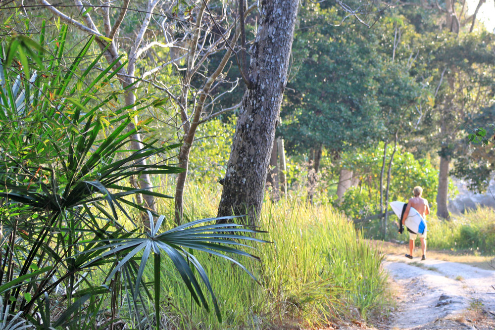Jungle Trails to Perfect Surf
