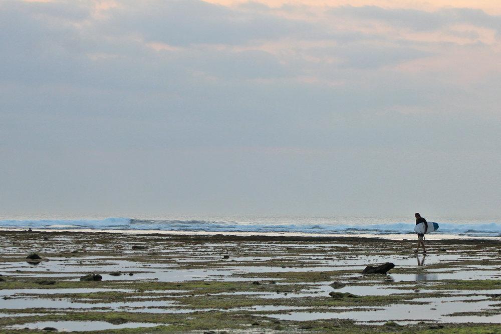 Low Tide Reef Walk