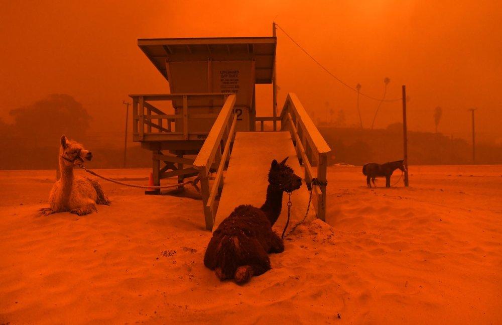 Woolsey Fire. Photo via LA Times.