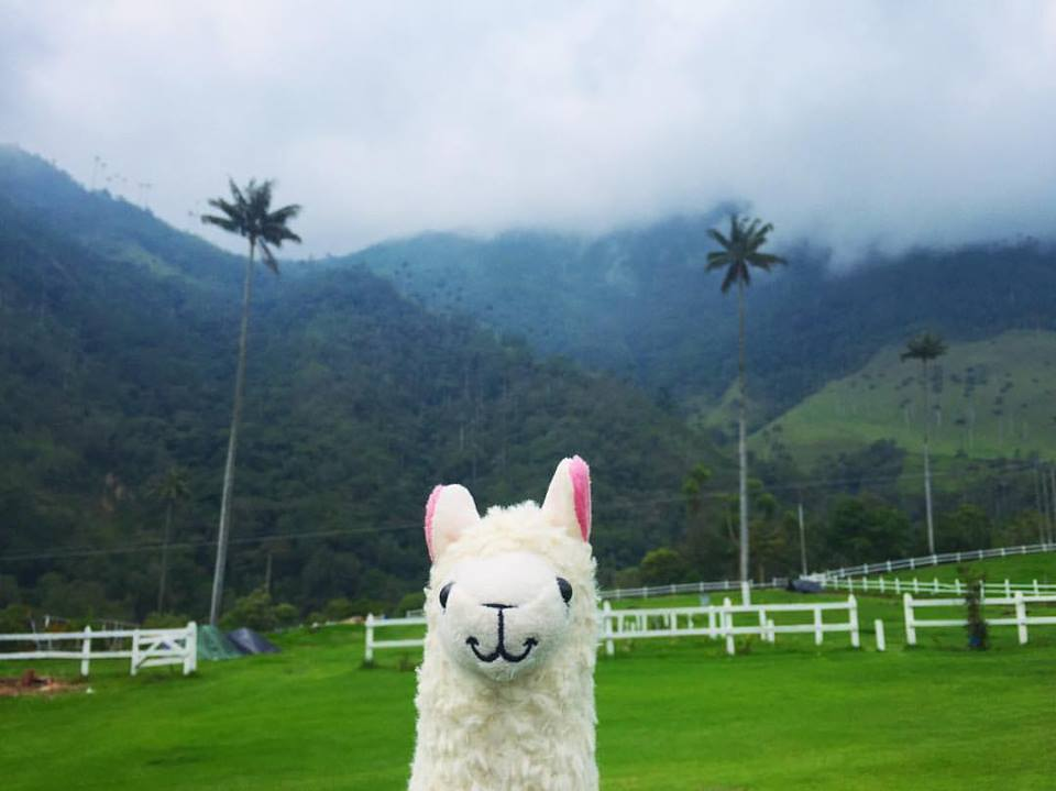 llamawithnodrama-thecocoravalley colombia.jpg