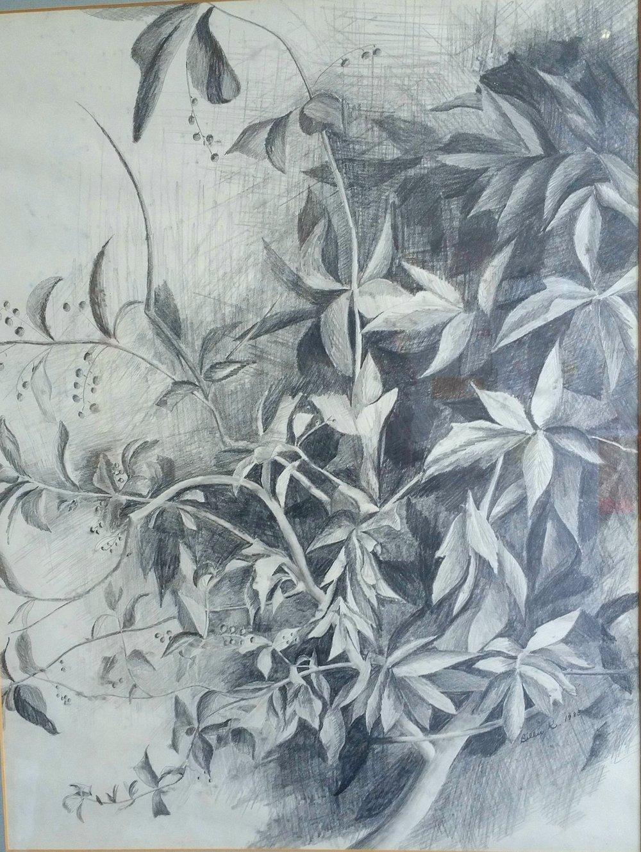 """Choke Cherries"" 18x24 graphite by Billie Kay Gross"