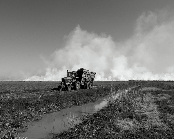 Sugar Cane Burning