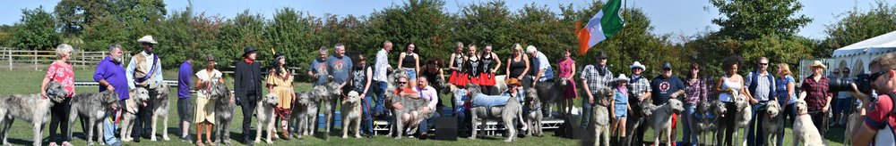 A gathering  of 40 irish Wolfhounds plus  on the day