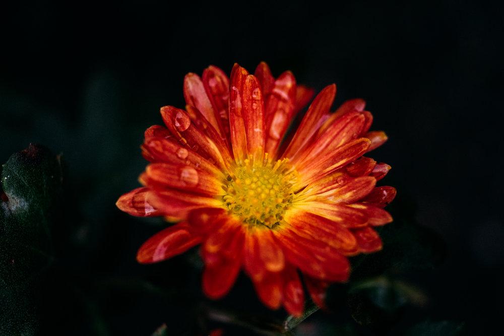 flower_photo.jpg