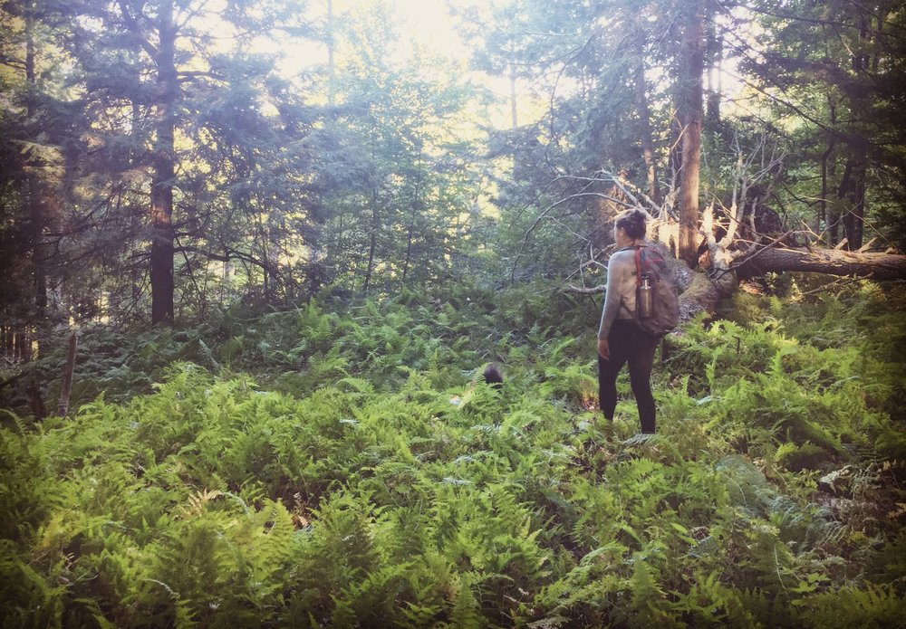 Foraging in the Catskills.jpg
