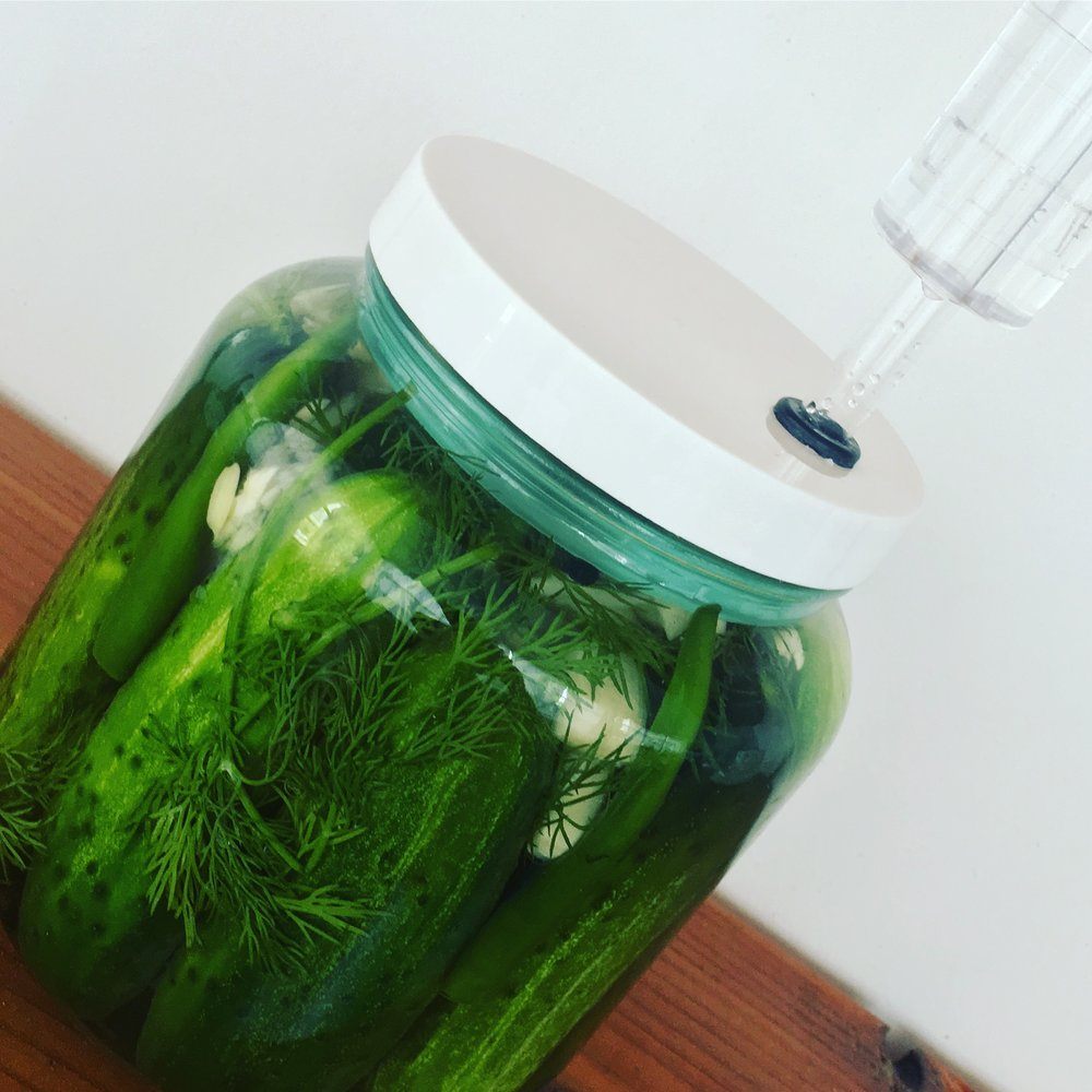 Dill Pickles in Fermenter