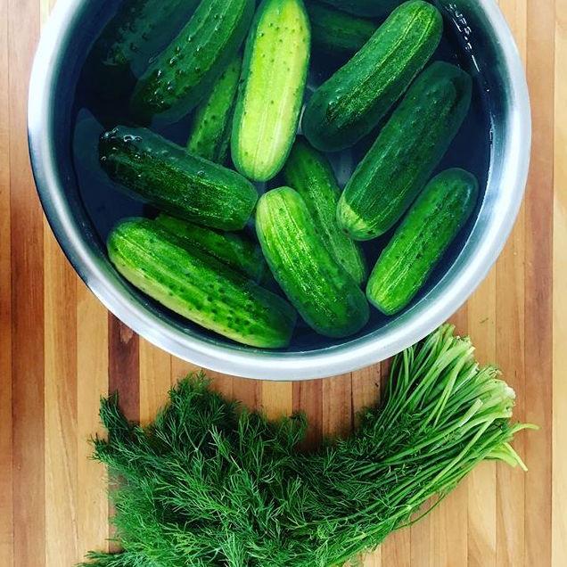 Dill Pickles.jpg