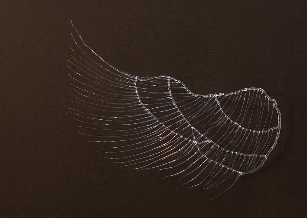 Flight   /detail