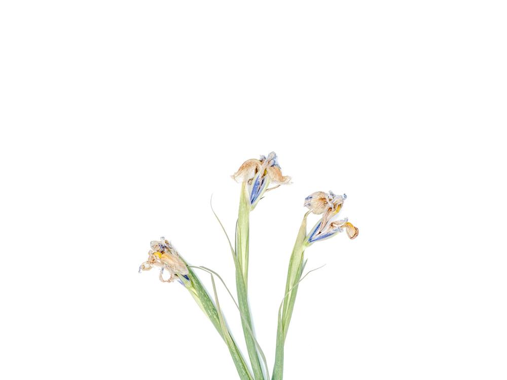 flowers2_3.jpg