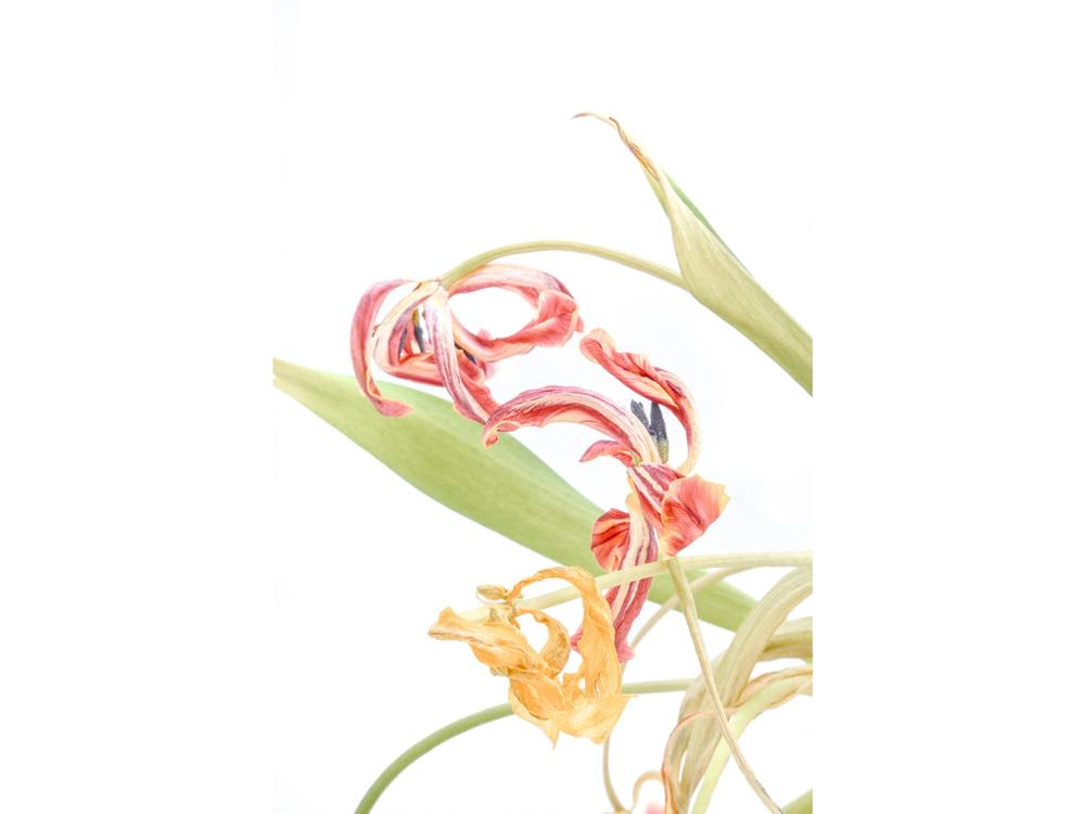 flowers2_1.jpg