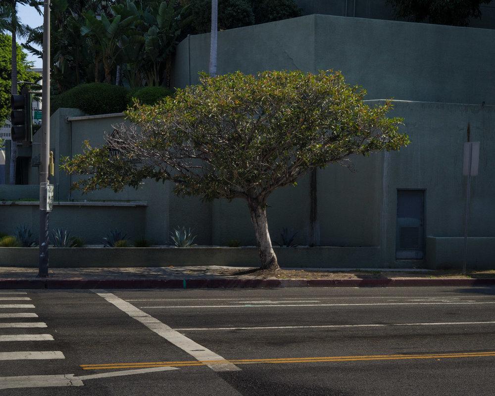 Weston James Palmer Tree.jpg