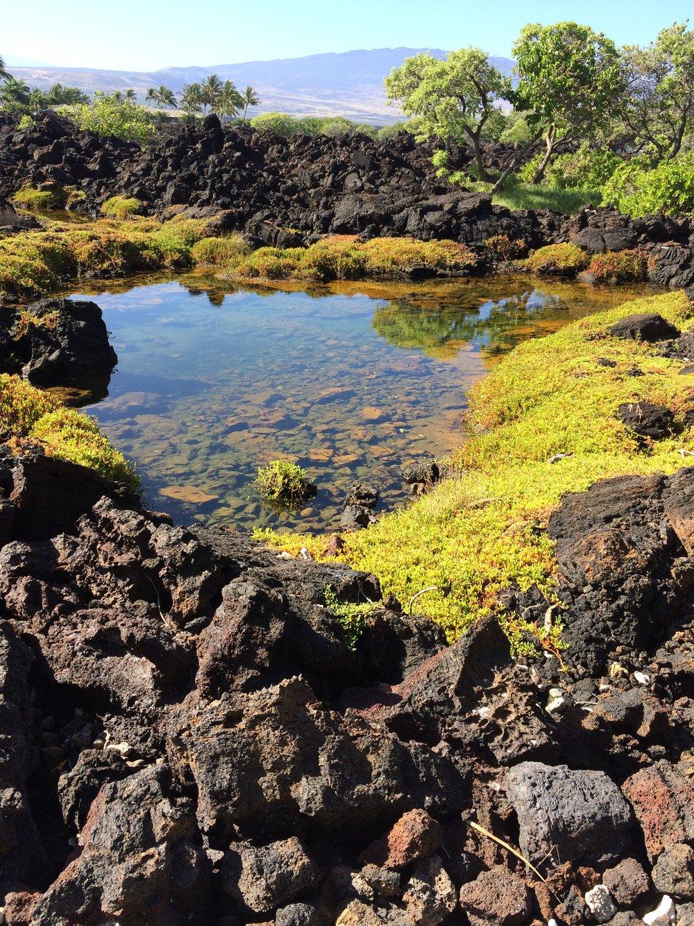 lava ecosystem