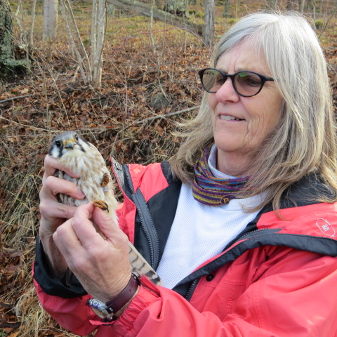 Patti Reum holds an American Kestrel, photo by Jill Morrow
