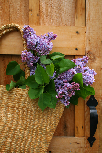 Lilacs_May_Basket.jpg